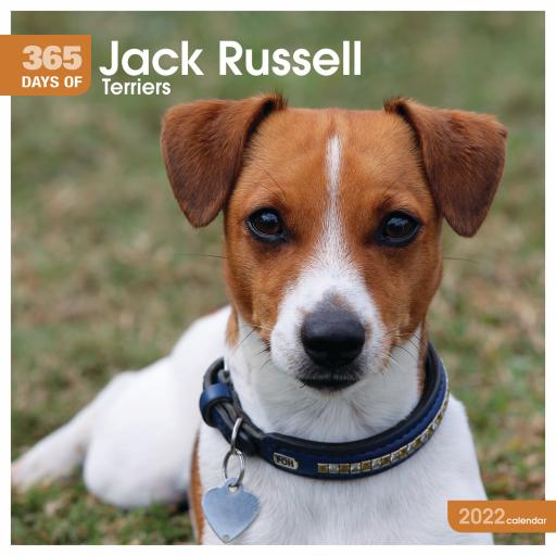 365 Days of Jack Russell Terriers Wall Calendar 2022