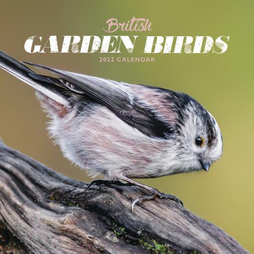 British Garden Birds Mini Wall Calendar 2022