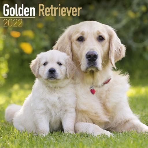 Golden Retriever Wall Calendar 2022