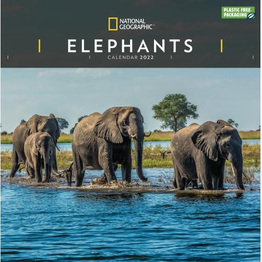National Geographic Elephants Wall Calendar 2022 (PFP)