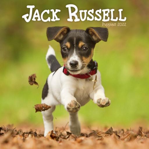 Jack Russell Puppies Mini Wall Calendar 2022