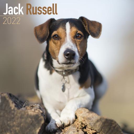 Jack Russell Wall Calendar 2022