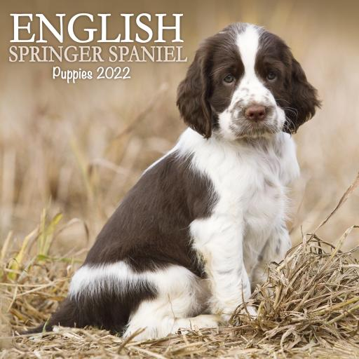 English Springer Spaniel Puppies Mini Wall Calendar 2022
