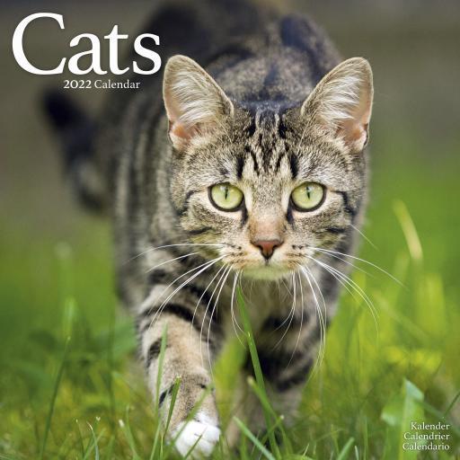 Cats Wall Calendar 2022