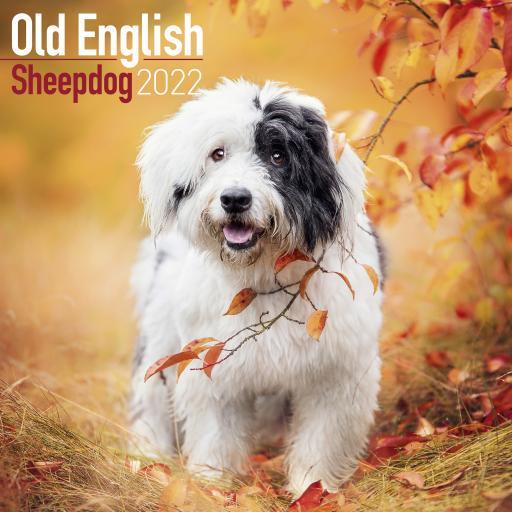 Old English Sheepdog Wall Calendar 2022
