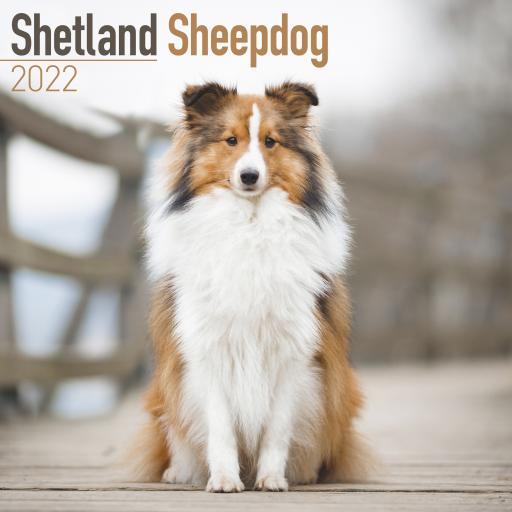 Shetland Sheepdog Wall Calendar 2022