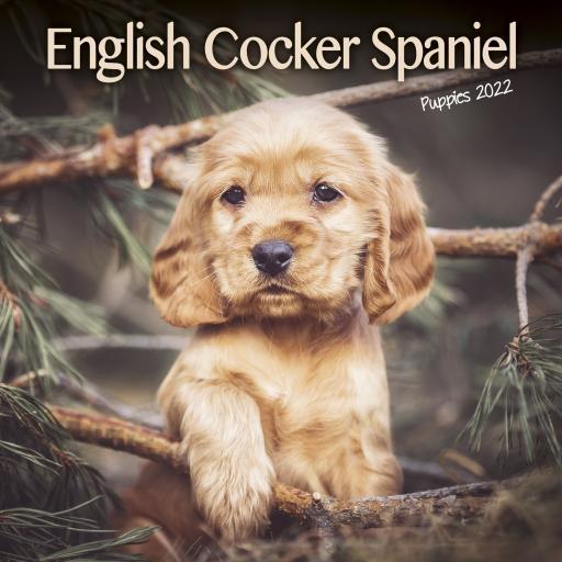 English Cocker Spaniel Puppies Mini Wall Calendar 2022
