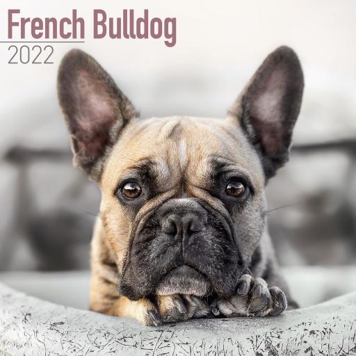 French Bulldog Wall Calendar 2022