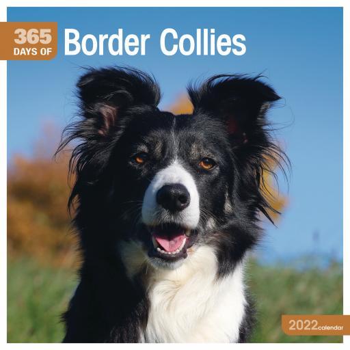 365 Days of Border Collies Wall Calendar 2022