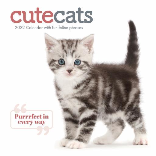 Cute Cats Wall Calendar 2022