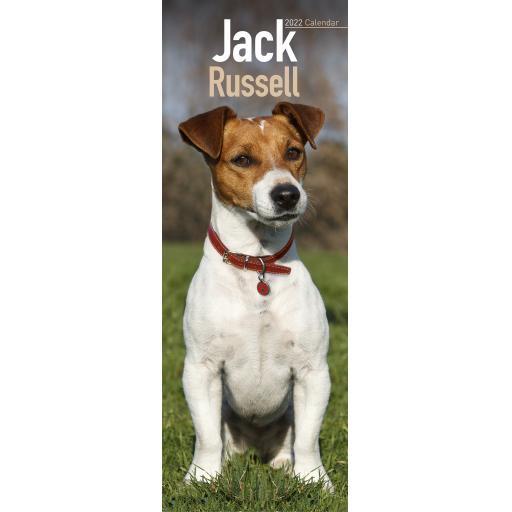 Jack Russell Slim Calendar 2022