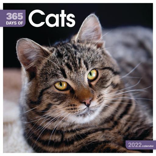 365 Days of Cats Wall Calendar 2022