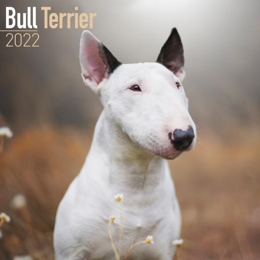 Bull Terrier Wall Calendar 2022