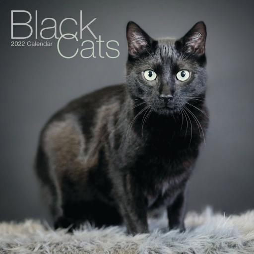 Black Cats Wall Calendar 2022