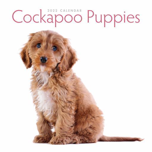 Cockapoo Puppies Mini Wall Calendar 2022