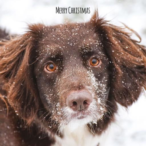 Charity Christmas Card Pack - Snowy Pup