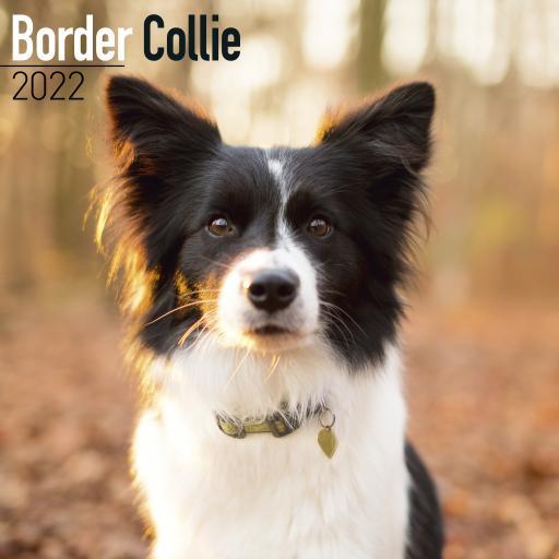 Border Collie Wall Calendar 2022
