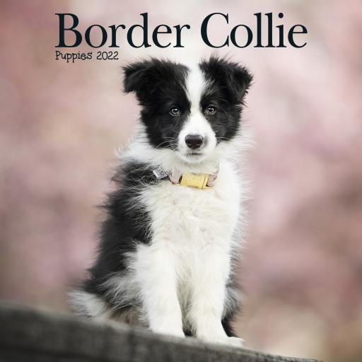 Border Collie Puppies Mini Wall Calendar 2022