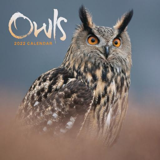 Owls Mini Wall Calendar 2022