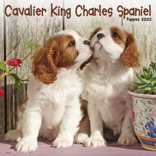 Cavalier King Charles Spaniel Puppies Mini Wall Calendar 2022