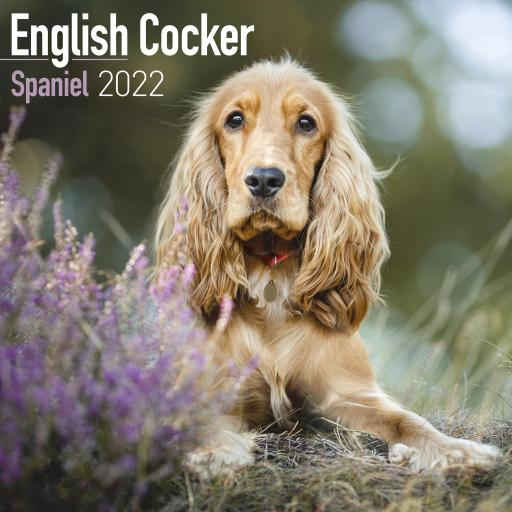 English Cocker Spaniel Wall Calendar 2022