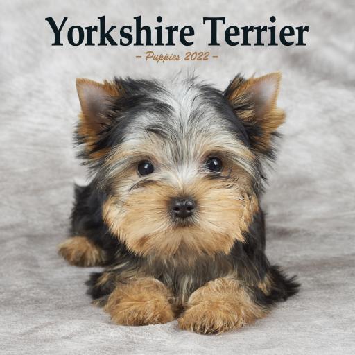 Yorkshire Terrier Puppies Mini Wall Calendar 2022