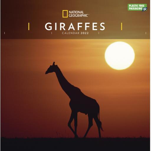 National Geographic Giraffes Wall Calendar 2022 (PFP)